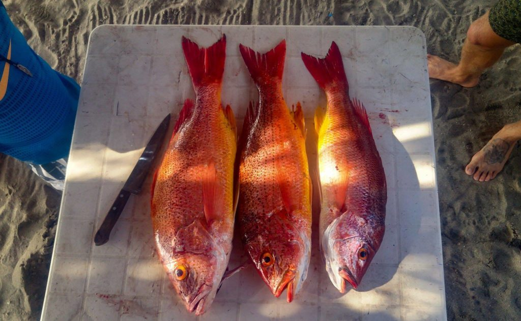 fins-feet-fly-poem-photo-huachinango